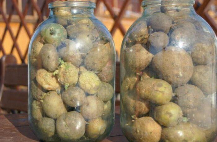 Семенной картофель в стеклянных банках