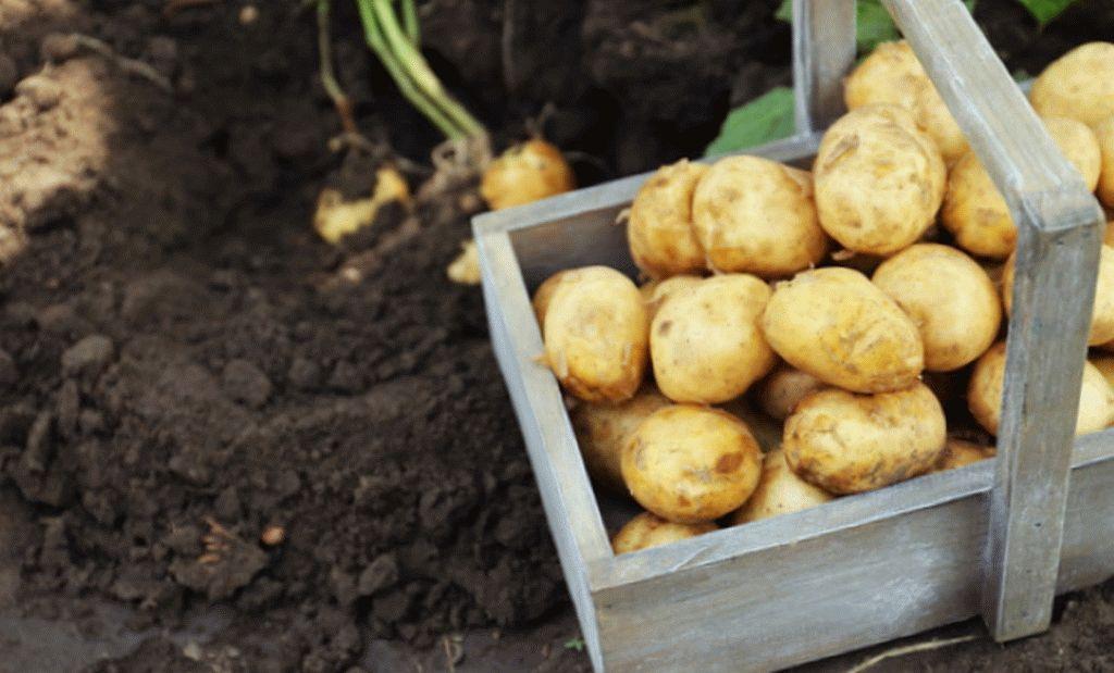 Продукты от высокого давления картофель