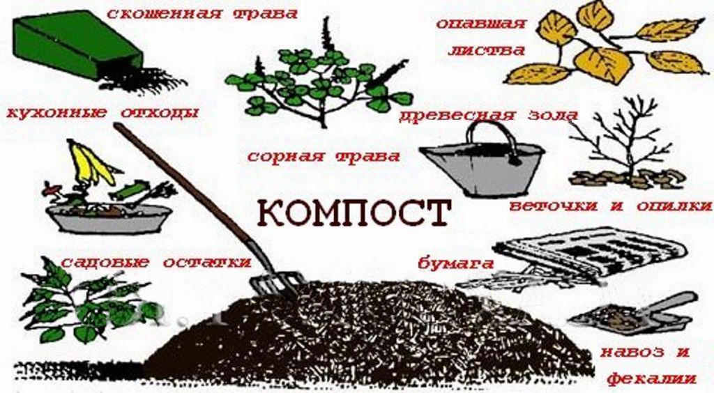 Из чего можно приготовить компост