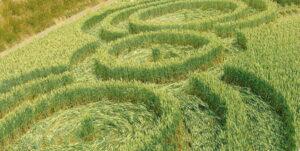 Загадочное явление круги на полях