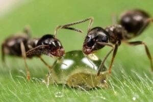 Жизнь муравьев полна трудов и тревог